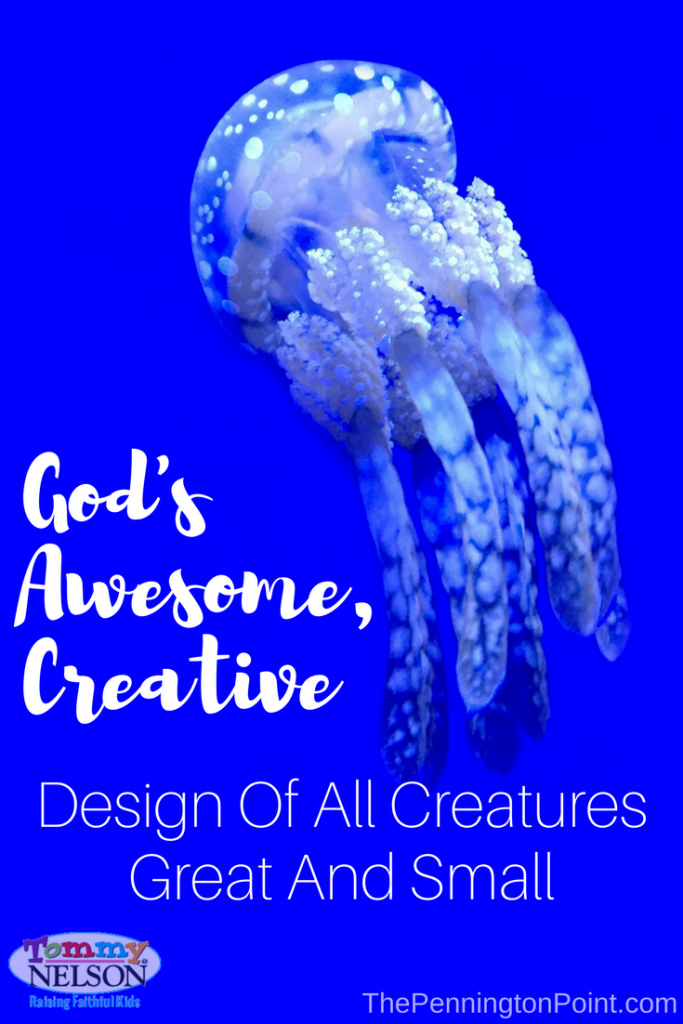 God's Awesome, Creative Design of All Creatures