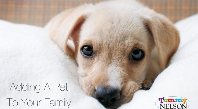 Adding A Pet To Your Family