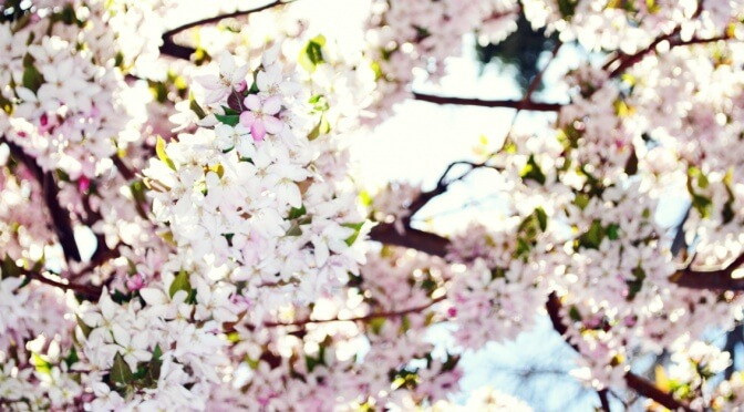 Three Reasons To Praise God For Spring